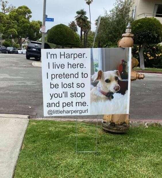 El perro tiene su propio letrero en el jardín delantero.