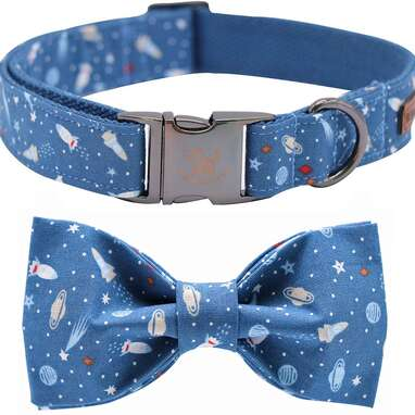 Elegant Little Tail Dog Collar with Bow
