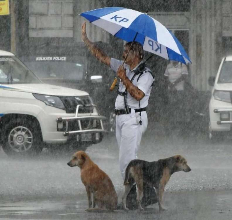 Cop protects stray dogs under his umbrella