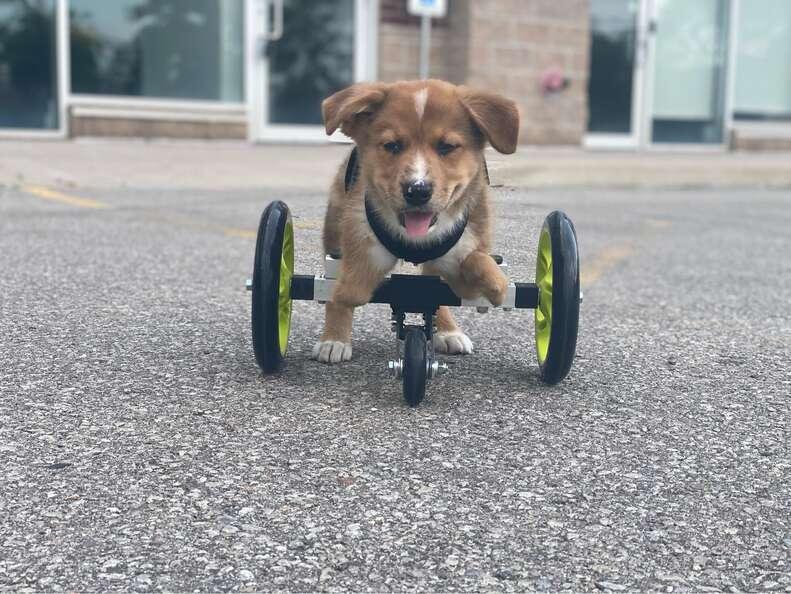 special needs puppy
