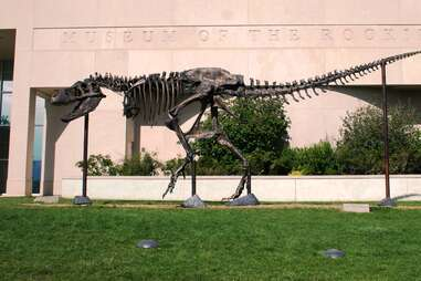 a t-rex skeleton outside a museum