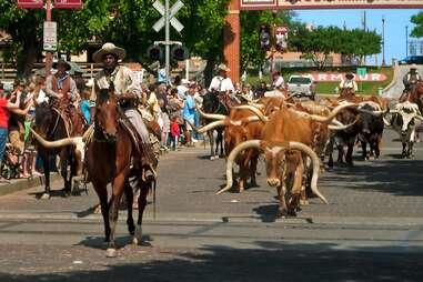 Fort Worth Longhorn Herd