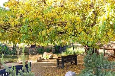 descanso garden's foliage