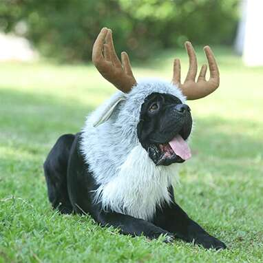 Funny Moose Costumes for Dog