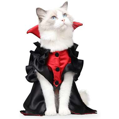 Cat Vampire Halloween Costume