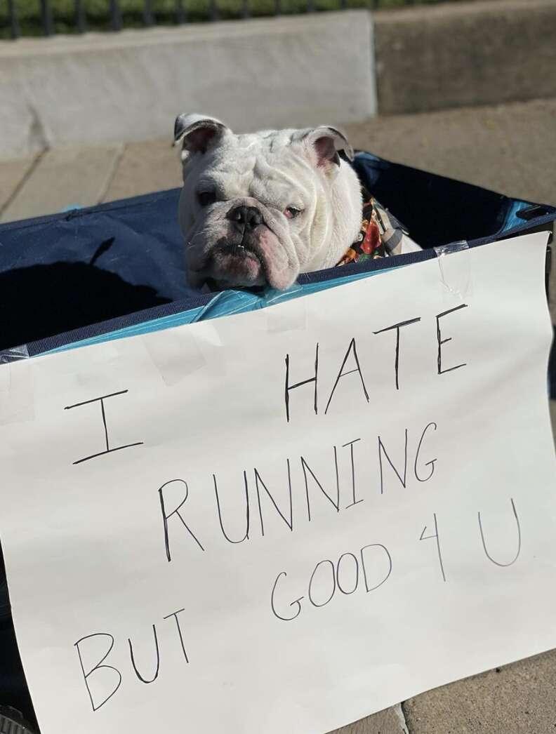 bulldog sign