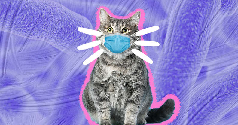 cat with face mask
