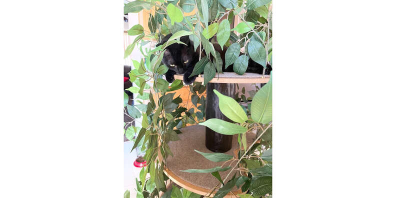 cat tree with leaves