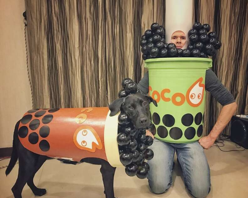 Boba halloween dog costume