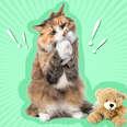 cat eating part of teddy bear
