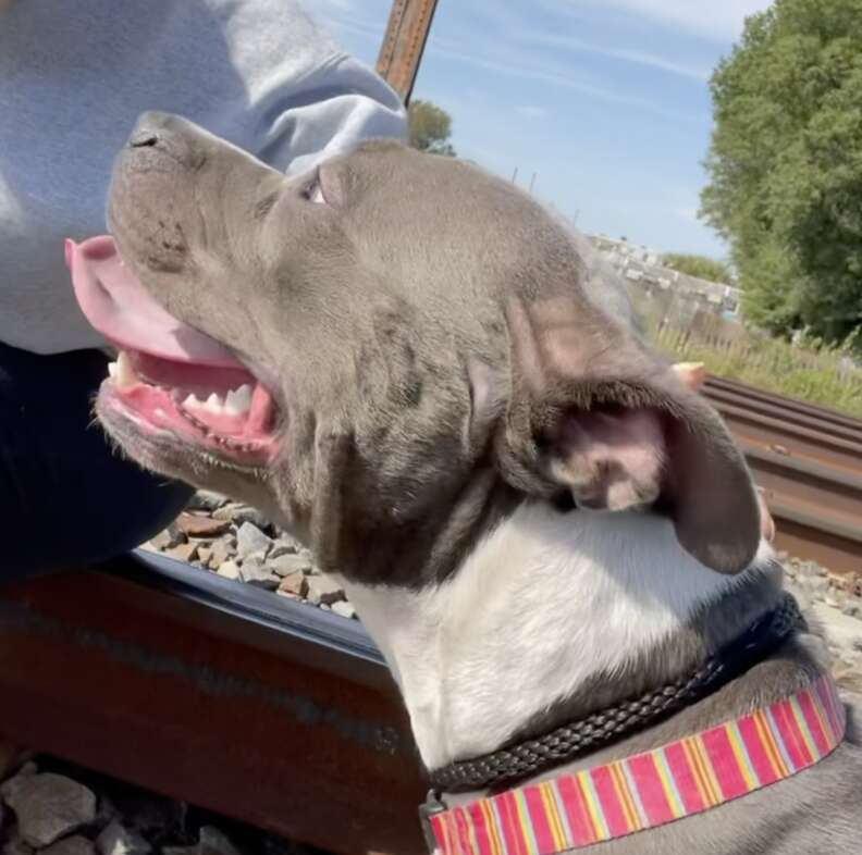 Dog rescued from oncoming train