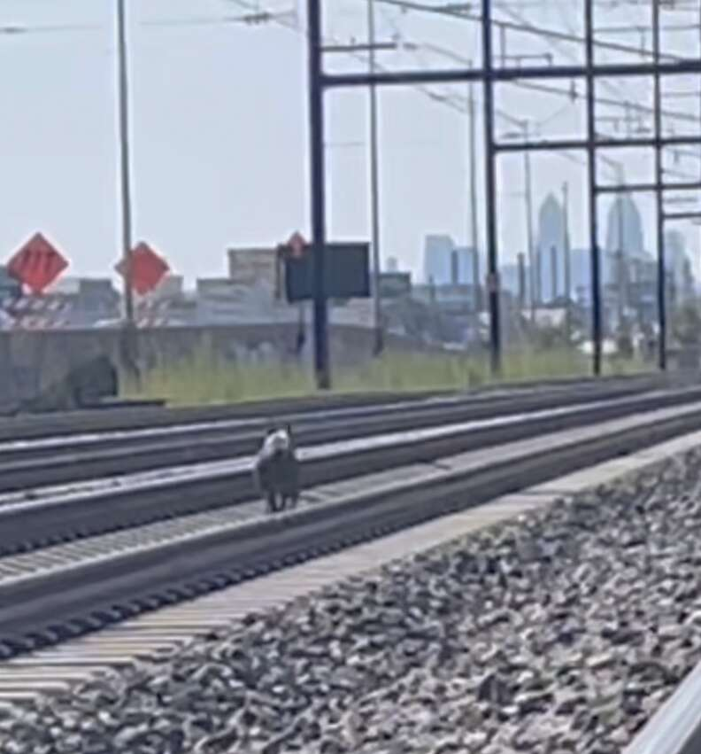 Dog rescued from train tracks
