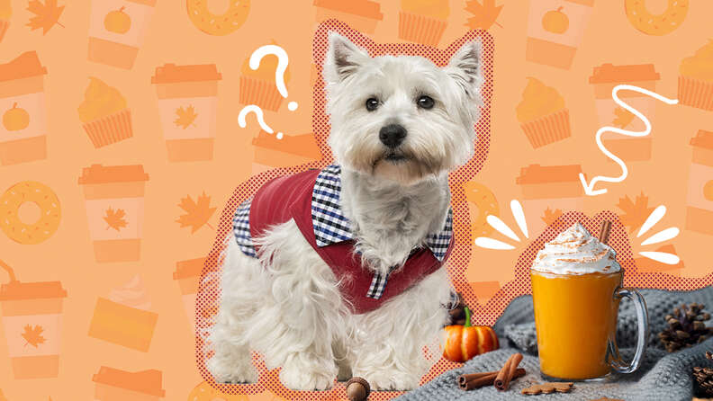 dog with pumpkin spice