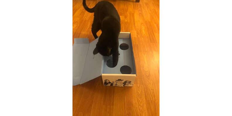 cat person box