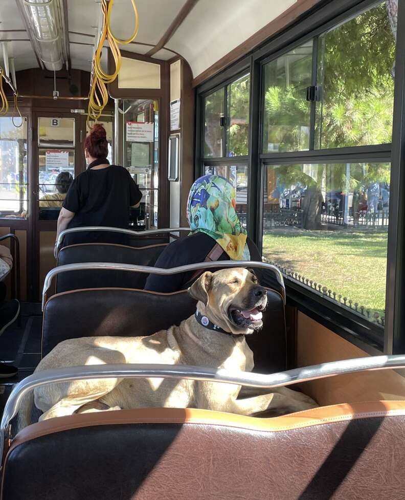 Boji the public transit dog