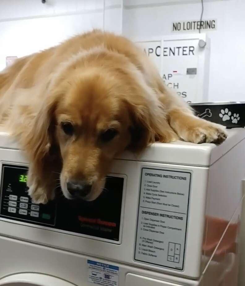 Dog guards washing machine