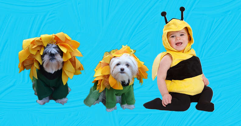 flower and bumblebee dog and baby costume