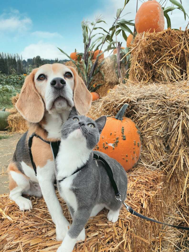 dog and cat pumpkin patch