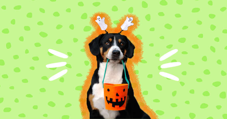 dog with ghost headband and candy bucket