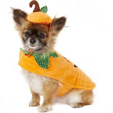 FRISCO Pumpkin Dog & Cat Costume