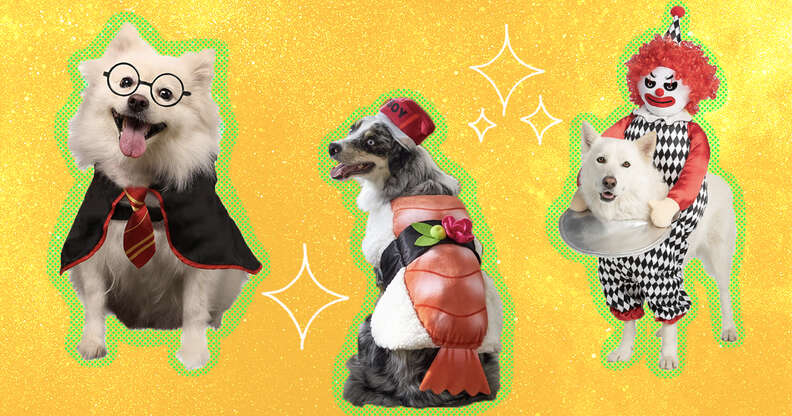 dogs in harry potter, sushi, clown costumes