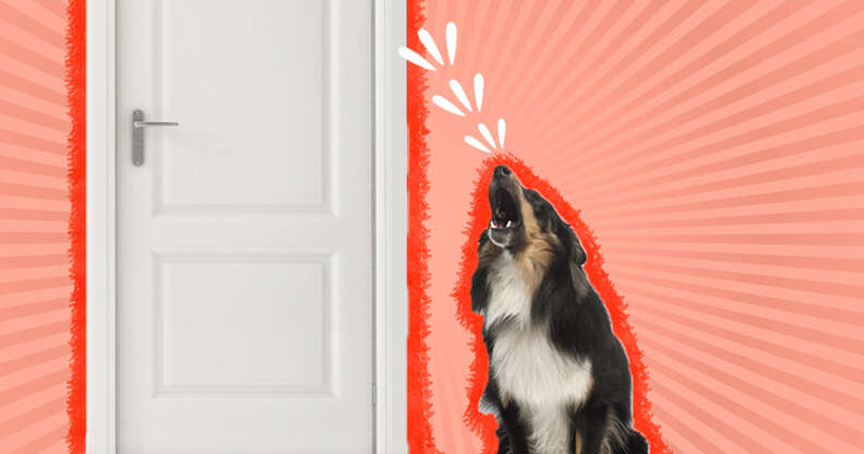 dog barking at the door