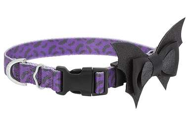 FRISCO Purple Bat Wing Dog Collar with Wings