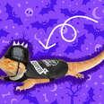 bearded dragon motorcycle costume