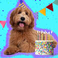 dog with birthday hat and cake
