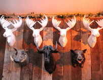 Various taxidermy heads