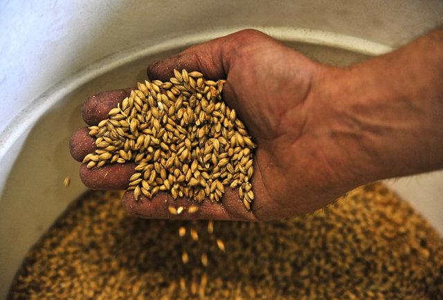 Wheat Ridge gets hop heavy