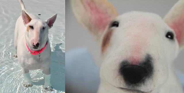 Get a mini-me of your canine companion