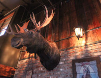 Moose head decoration at Sam's Tavern in Seattle