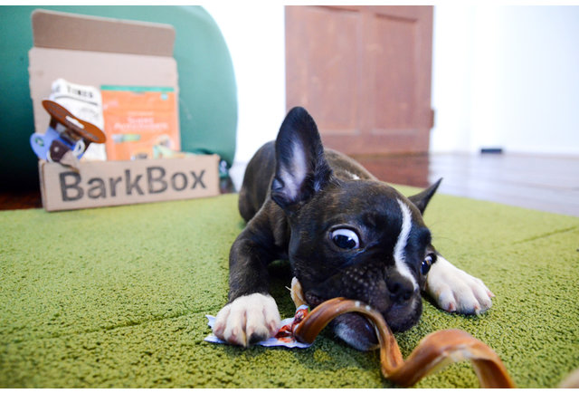 Get treats for your pooch delivered to your door every month