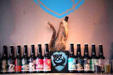 Even squirrels love BrewDog's collection of brews