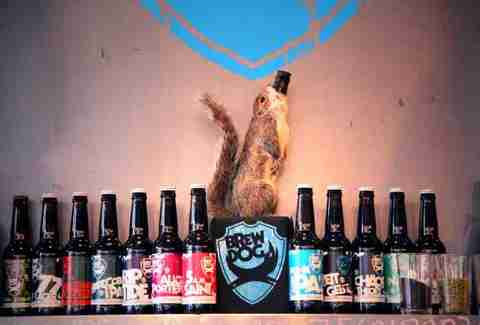 Even squirrels love BrewDog's collection of brews