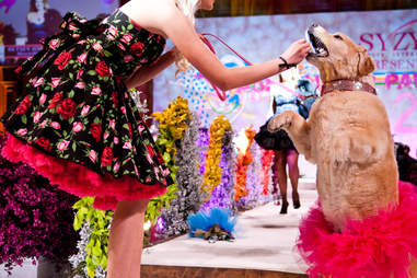 Fashion for Paws Party