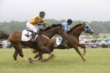 Horses at Foxfields