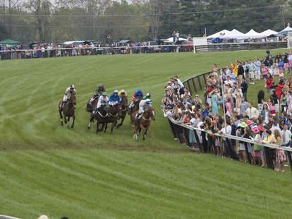 Horses at Foxfield