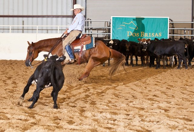 Rope live cattle and eat at Texas\' only five-star restaurant