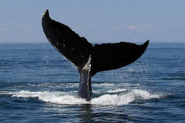 Kura Design Villas Whale