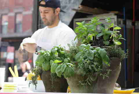 The Standard's Pizza Garden - herb pots
