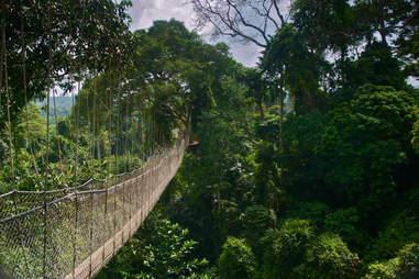 Canopy Walk, Ghana