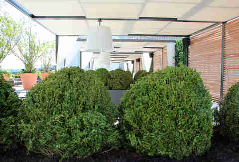Shrubbery on the Revere Hotel roofdeck