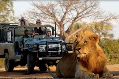 Bushtracks custom safari