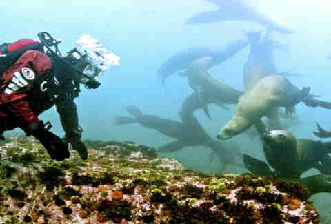 Scuba diving in the Bering Sea in Siberia