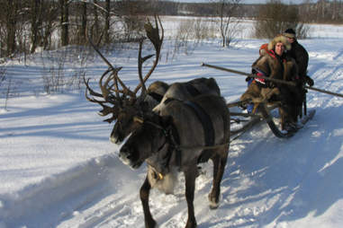 Reindeer sledding in Siberia