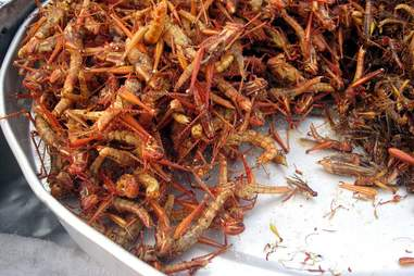 Congolese grasshoppers