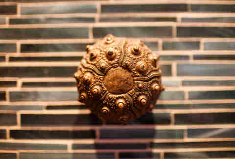 A bronze sea urchin at Navio