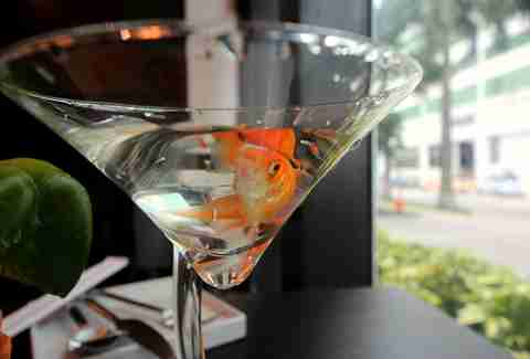 Bob the goldfish at Nikko by Sunshine